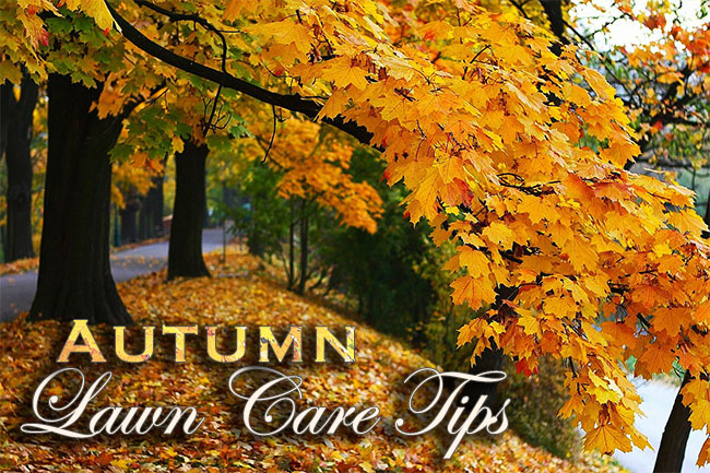 Autumn Lawn Care Tips