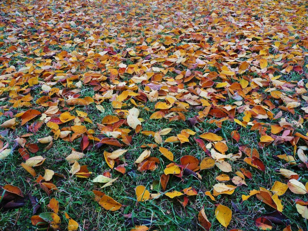 fall easy leaf removal